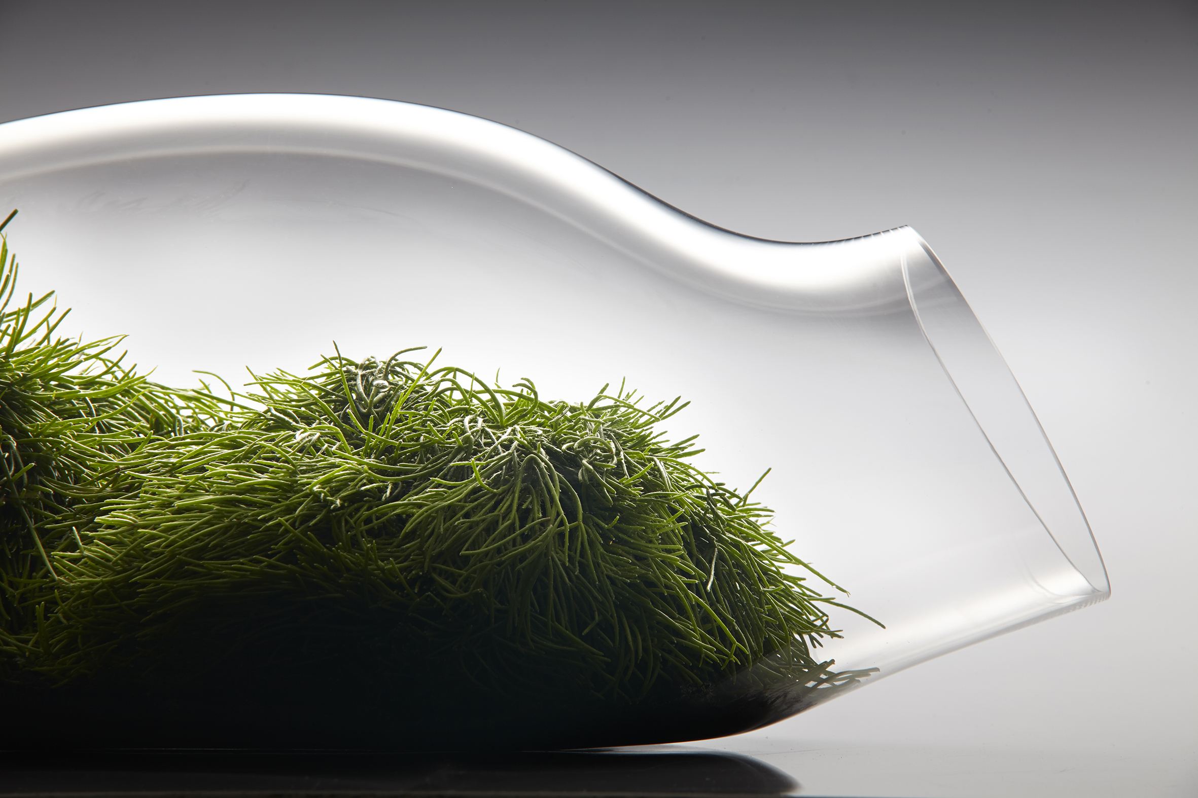 2 8 Honorable Mention In Product Design The Glass Garden